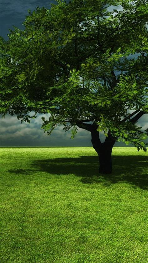 Wallpaper Free Tree Images by Tree Mobile Wallpaper Gallery