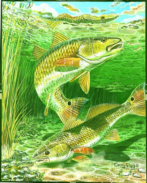 redfish haven  painting  carey chen