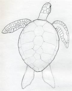 drawings of cute animals | The Ol' Sketchbook: Cute Turtle ...