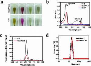 Characterization Of Hanp  Ce6 Complexes   A  Stability Test
