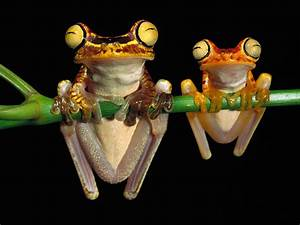 wallpapers: Funny Frogs Wallpapers