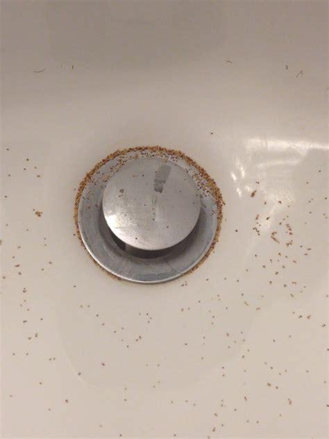 bugs in kitchen sink tiny bugs around bathtub drain best bathtub 2017