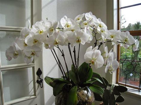 soigner les orchidees en pot cara mudah budidaya tanaman hias bunga anggrek jenis tanaman terbaru