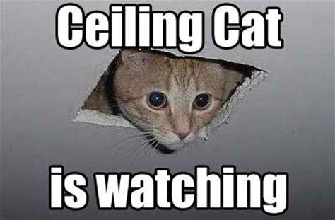 Internet Cat Meme - 10 of the web s most popular cat memes mnn mother nature network