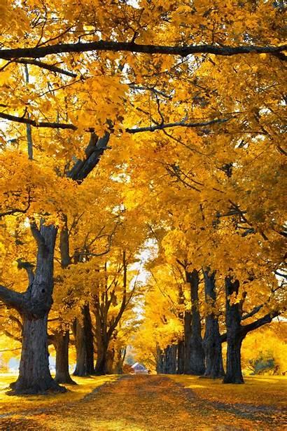 Nature Scenery Circle Autumn Scenes Kieljamespatrick Guardado