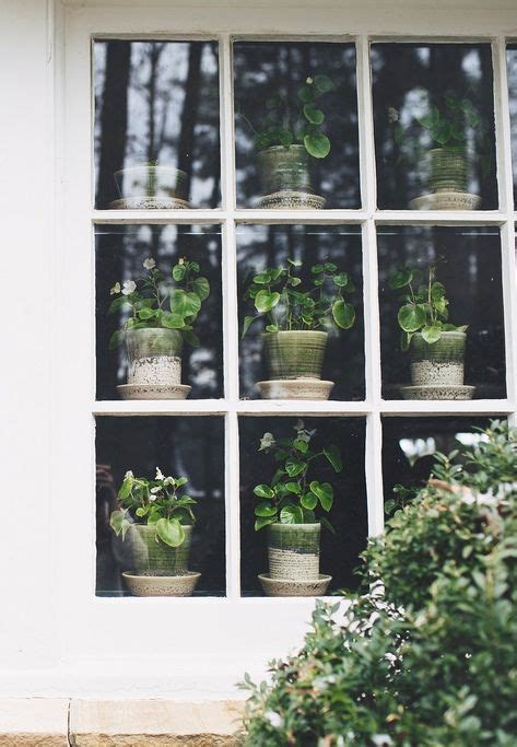 window herb garden potted plants in a window plants can interiors design offices exterior windowsill decor