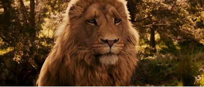 Narnia Lion Witch Wardrobe Aslan Chronicles Wallpapers