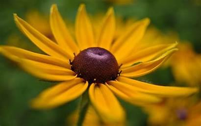 Flower Wallpapers Yellow Flowers Desktop A1 Flor