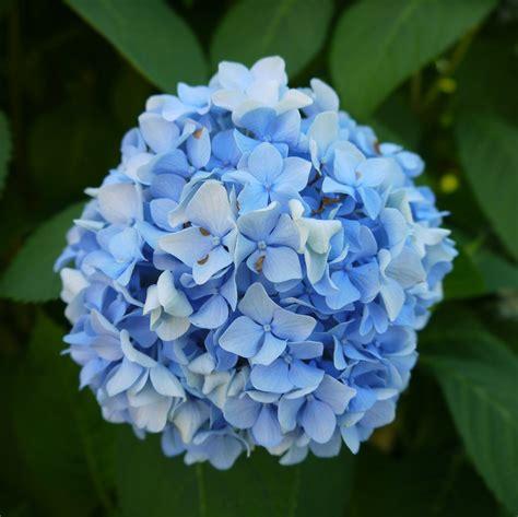 light blue flowers light blue flowers by dseomn on deviantart