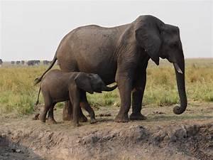 Baby Animals on Safari