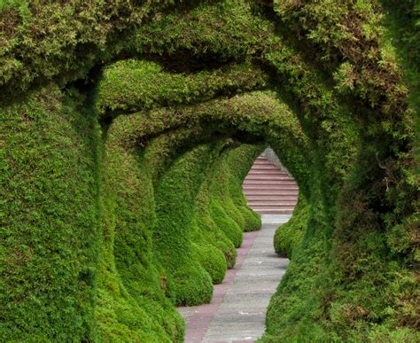 10 Breathtaking Tree Canopies & Natural Tunnels That Look