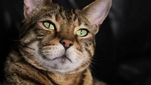 Katzen Fernhalten Von Möbeln : eine phonetikerin entschl sselt das miauen und schnurren ~ Michelbontemps.com Haus und Dekorationen