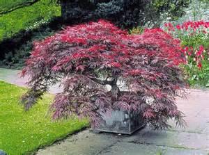 quel arbre de taille pour mon jardin