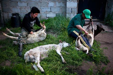 mongolias nomads   big picture bostoncom