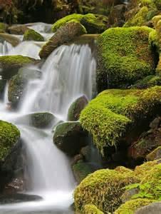 Olympic Peninsula Rainforest Waterfall