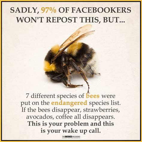 Bee Memes - this takedown is the bees knees the meme policeman