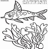 Catfish Coloring sketch template