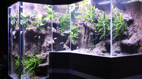 aquarium sur mesure de cichlid 233 s du tanganyika