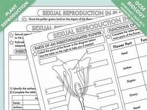 Gcse Biology  Plant Reproduction Worksheet Pack