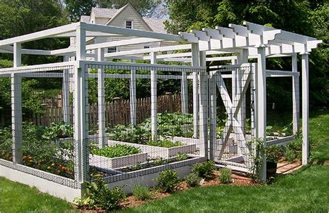 Vegetable Garden, Gardens And Dog