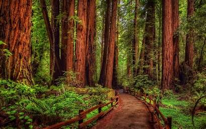 Backgrounds Wallpapers Path Redwood Forest Park Tree