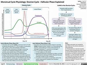 Menstrual Cycle Physiology  Ovarian Cycle  U2013 Follicular