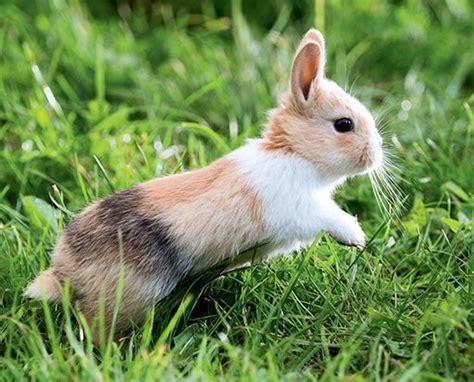 le de chevet lapin pourquoi le lapin t il de la patte nosanimos