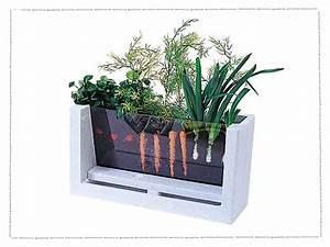 This Mini Farm Teaches Kids How Vegetables Grow