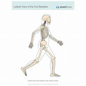 View Of The Full Skeleton