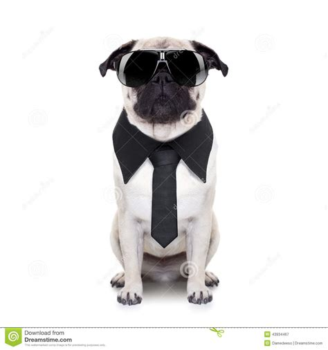 cool dog stock photo image