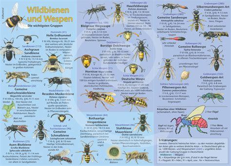 natur entdecken wildbienen und wespen