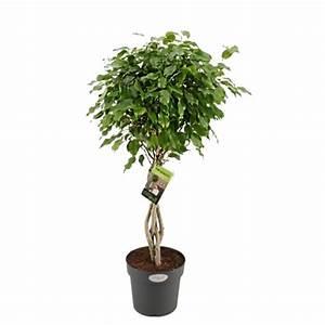 Plante D Intérieur Haute : plante haute interieur 28 images plante haute ~ Dode.kayakingforconservation.com Idées de Décoration