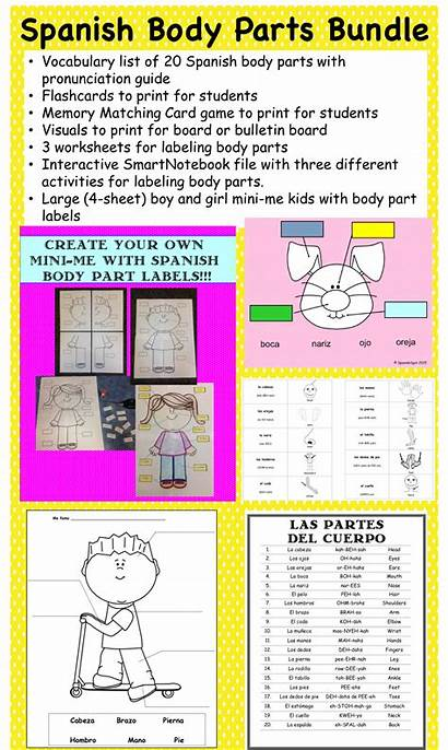 Spanish Parts Teacherspayteachers Teaching Preschool Lessons