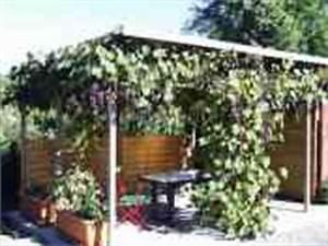 Pergola Mit Wein Bepflanzen : blauer bernburger wein pergola ~ Eleganceandgraceweddings.com Haus und Dekorationen