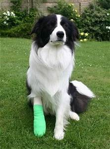 beloved pets in casts