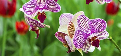 prendre soin de orchid 233 e conseil plantes et orchid 233 es botanic botanic