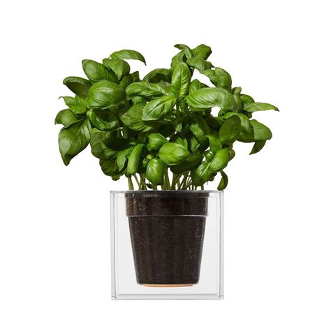 Green Planter boskke clear cube self watering planter the green head