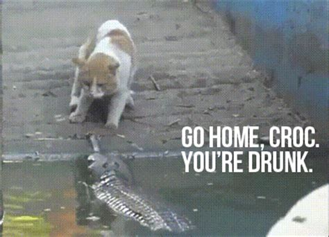 image   home   drunk   meme
