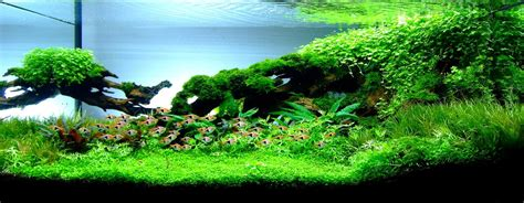 Amano Aquascape by Nature Aquarium Aquascaping Planted Aquariums Aqua