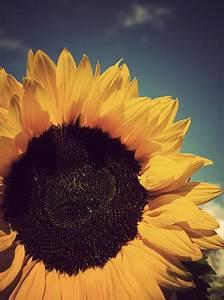 Vintage Sunflower Tumblr | www.imgkid.com - The Image Kid ...