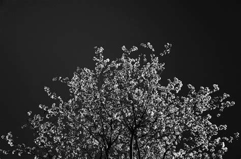 images gratuites arbre branche noir  blanc plante