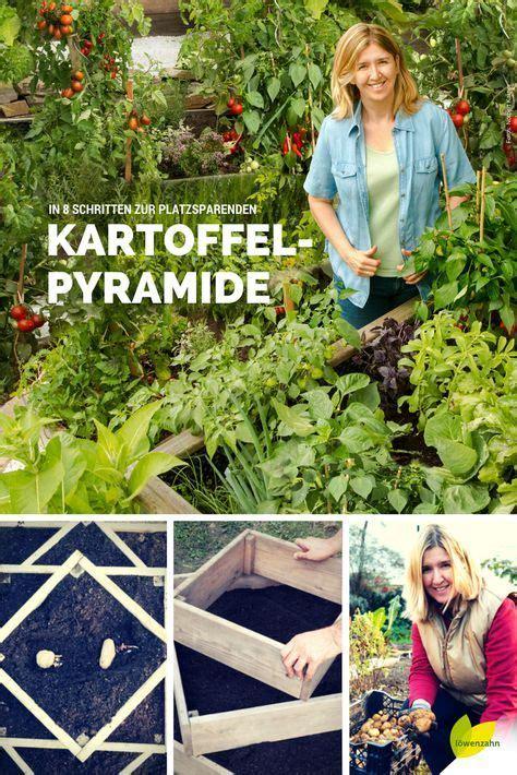bohnen selbst anbauen kartoffeln selbst anbauen in 8 schritten zur
