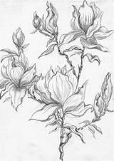 Henny Flowering Hennydonovanmotif Gcssi sketch template