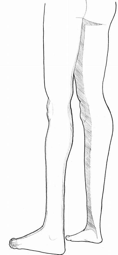 Legs Vasil Drawing Animation