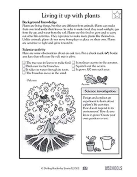science worksheets for 4th grade plants plant and animal