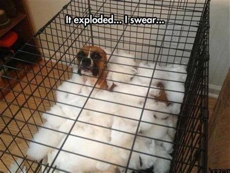 funny animal pictures   day  pics