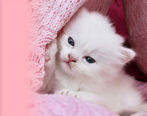 pink cat wallpapers top  pink cat backgrounds