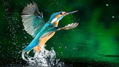 3d Birds Wallpapers by 13 Beautiful Hd And 4k Wallpapers Of Birds That You