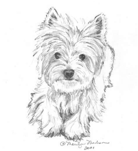 teacup yorkie puppies drawings sketch coloring page