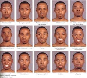 Muscles of Facial Expression Face